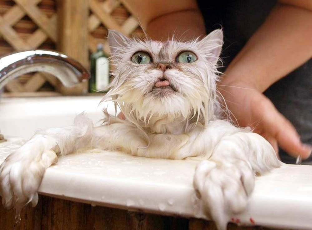 Когда кошка умывается и когда отказывается мыться: причина