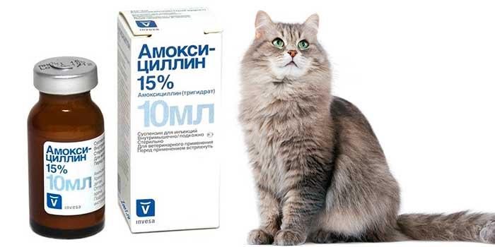 Байтрил для кошек: форма выпуска, дозировка и применение