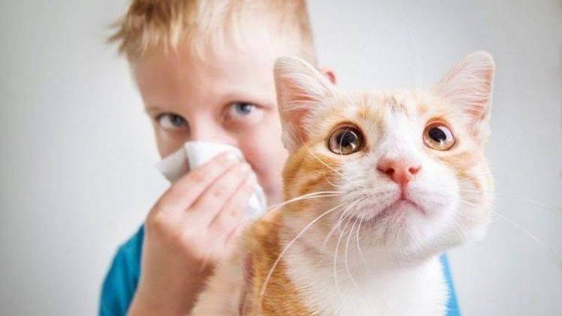 Какую кошку или собаку завести аллергику?