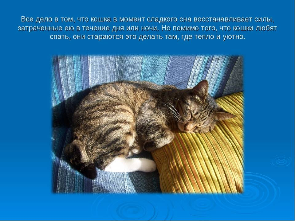 Сонник слышать мяукание кошки. к чему снится слышать мяукание кошки видеть во сне - сонник дома солнца