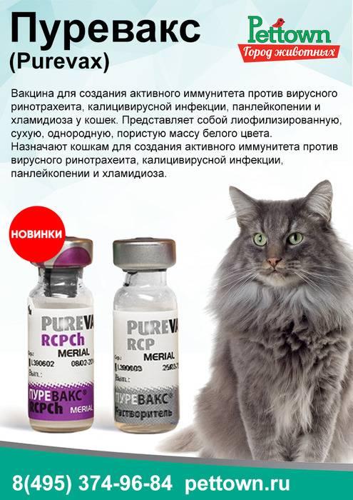 Пуревакс для кошек: инструкция, мнение ветеринаров и владельцев.