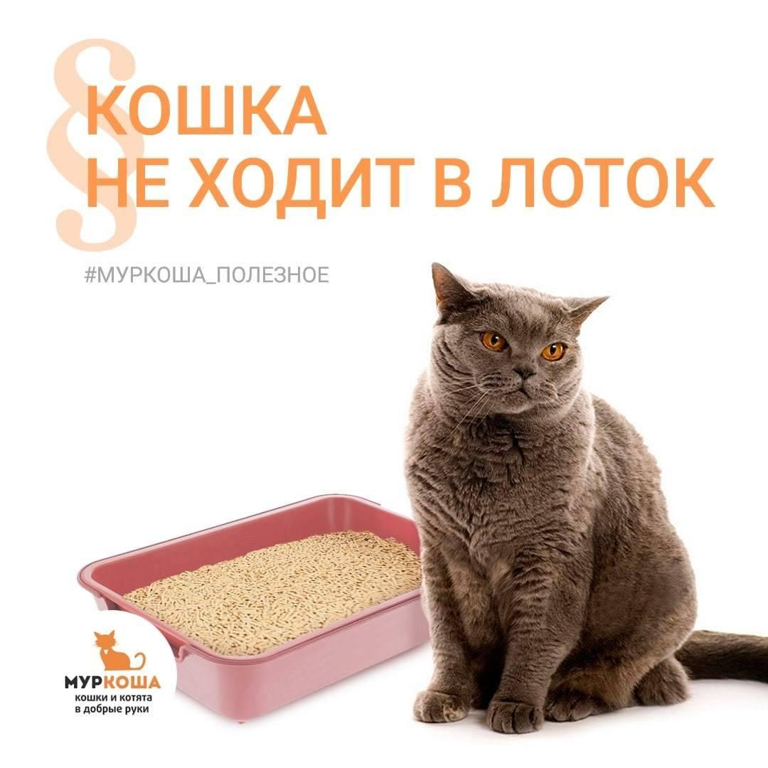 Почему кошка перестала ходить в лоток: как исправить ситуацию?