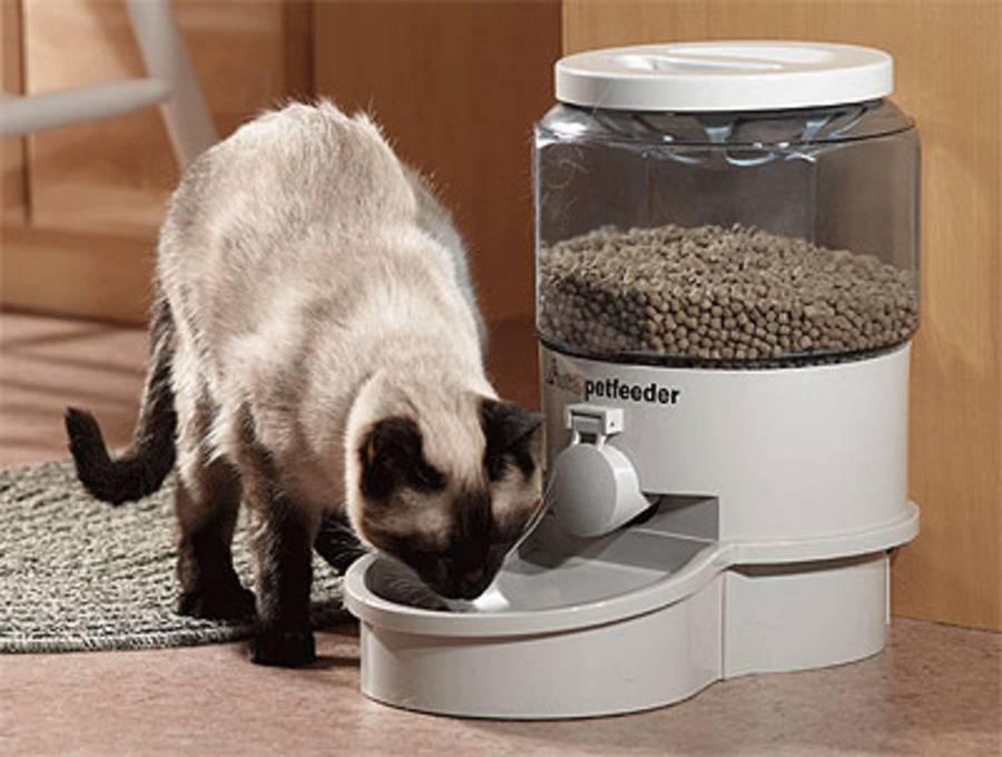 Автокормушка для кошек своими руками: процесс изготовления автоматической кормилки, различные варианты изделий