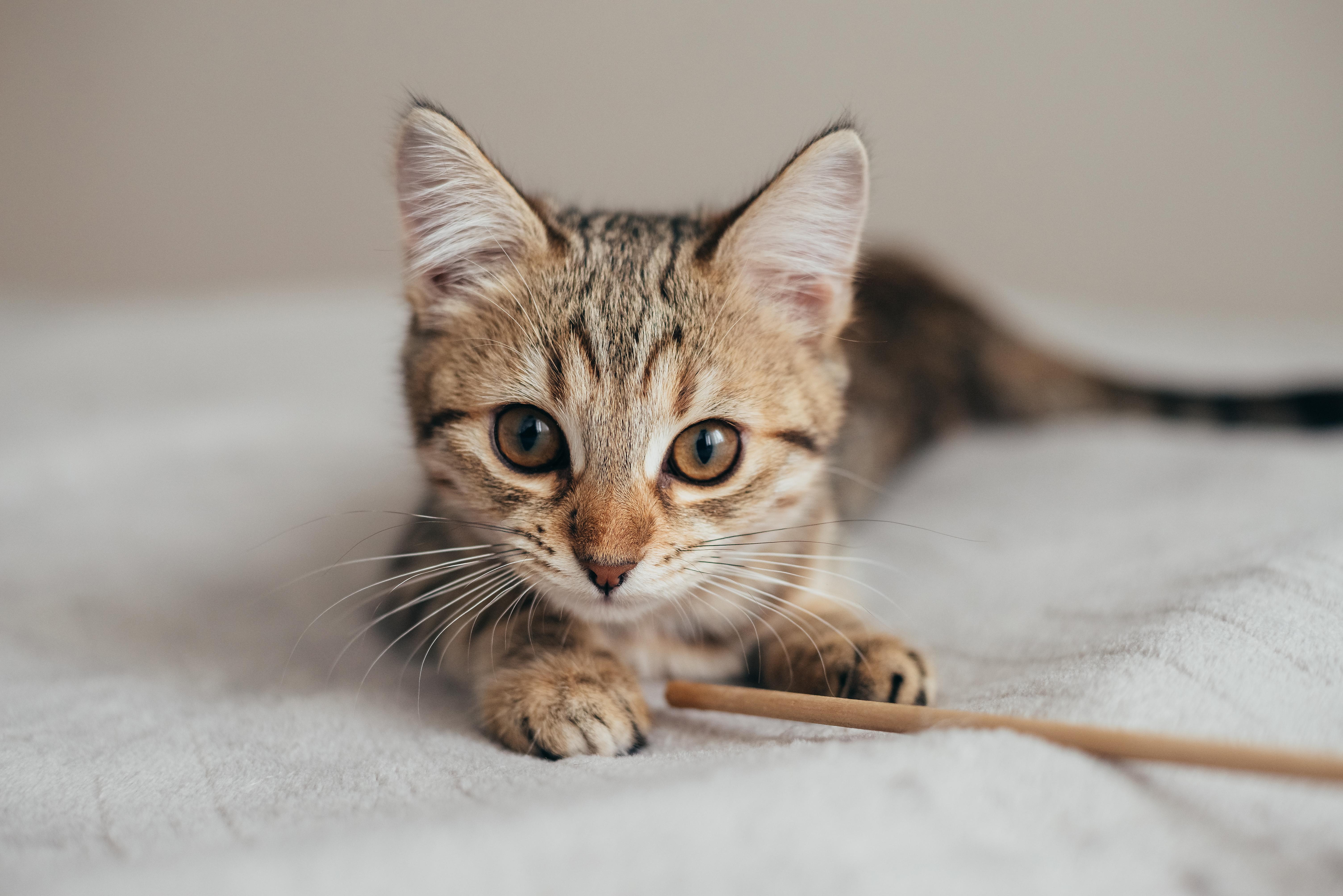 От чего у кошек может быть аллергия
