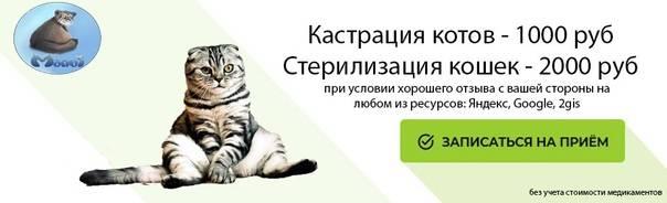 Кот или кошка орет: почему кастрированные кот или кошка орет