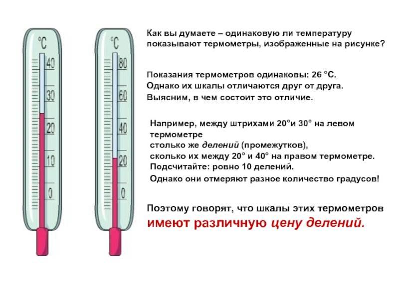 Как измерить температуру кошке: чем мерять, без градусника