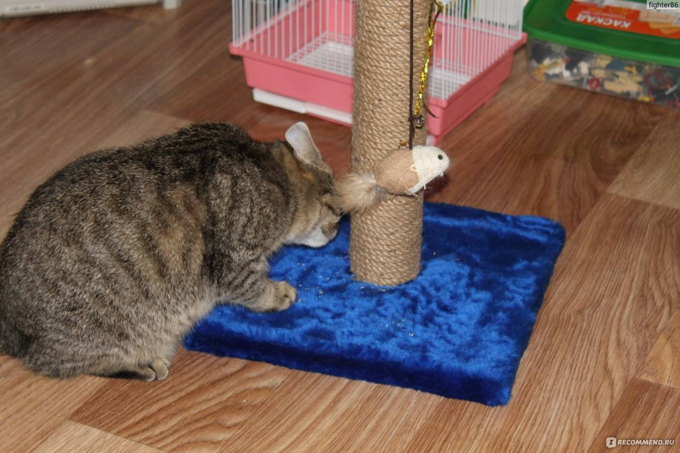 Как приучить котенка, кота или кошку к когтеточке?