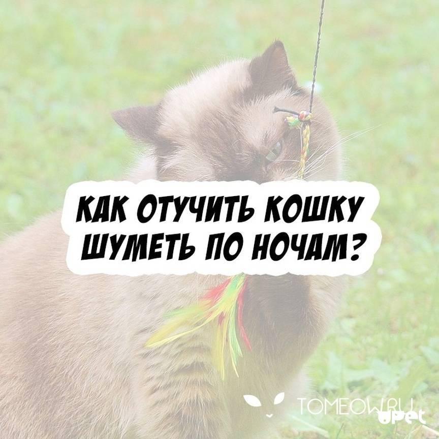 Как отучить кота орать по утрам: эффективные методы