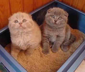 Обзор: какой вид наполнителя для кошек лучше