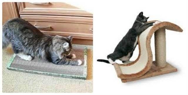 Как отучить кота драть обои: практические советы