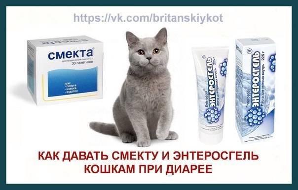 Смекта котятам при поносе: показания, дозировка, противопоказания