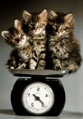 Когда можно определить пол котенка?