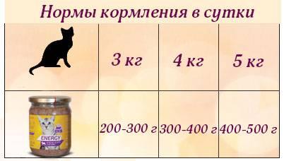 Чем кормить котёнка: формируем полноценный рацион