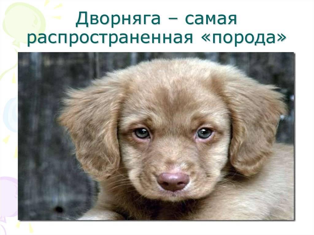 Собака дворняжка. краткое описание: выбрать дворняжку или собаку породистую | здоровое питание