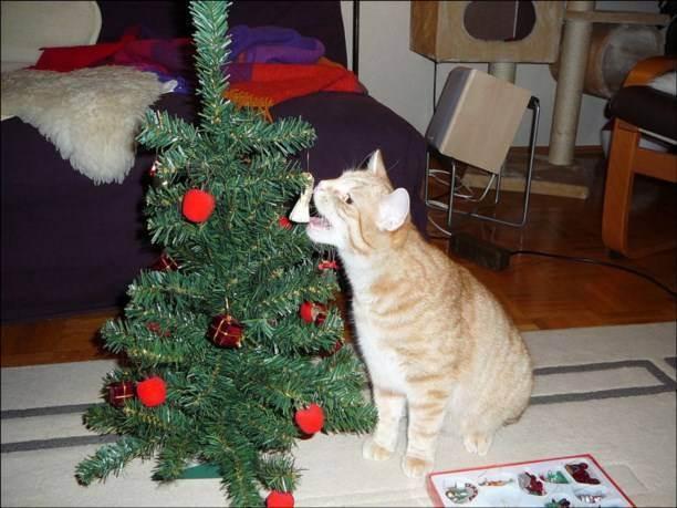 Как обезопасить кошку в новогодние праздники