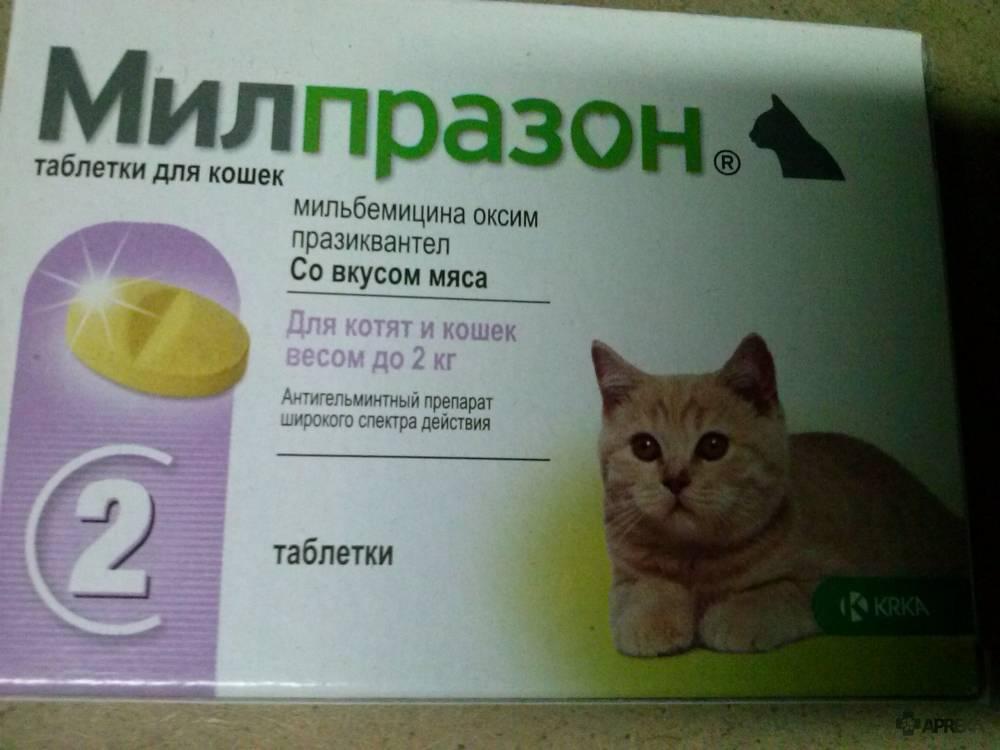 «канефрон» для кошек: инструкция по применению, дозировка, как давать, можно ли давать коту