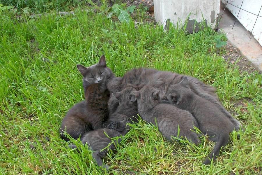 Приметы и поверья про трехцветных кошек
