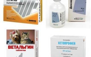 Обезболивающее для кошек: виды препаратов, как выбрать, обзор популярных анальгетиков, отзывы