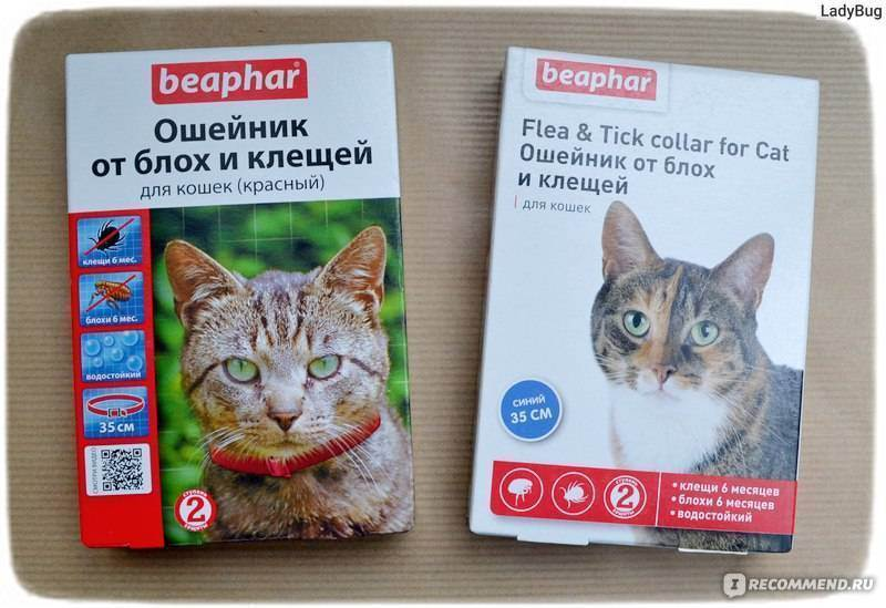 Ошейники от блох для кошек: обзор самых популярных со средними ценами, а так же плюсы и минусы использования