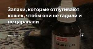 Help! как отучить соседскую кошку гадить под двери, чтобы ни одна кошка при этом не пострадала? - страна мам