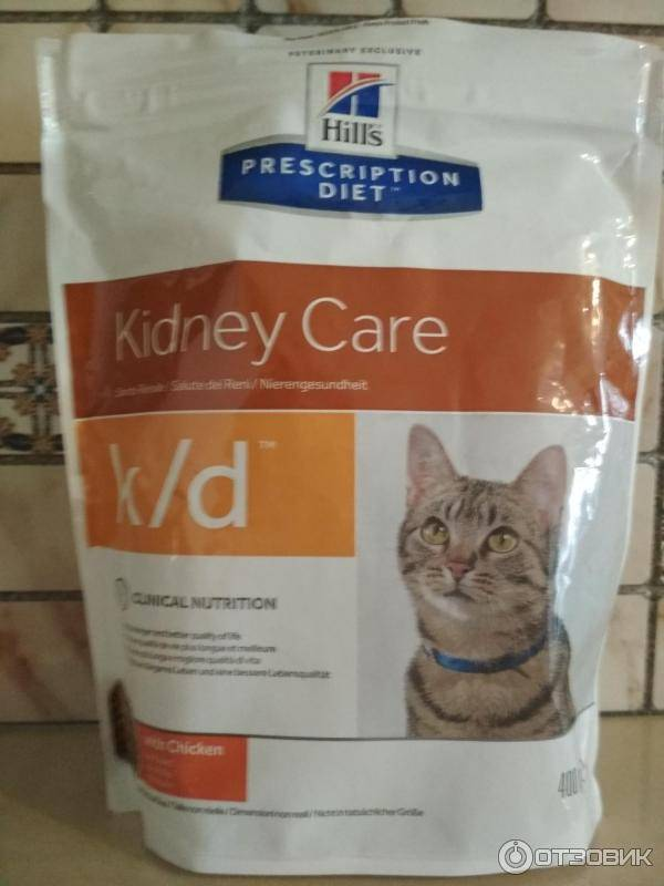 Чем кормить кошку при почечной недостаточности: выбор правильного рациона