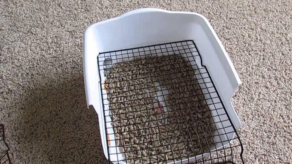 Как установить кошачий туалет
