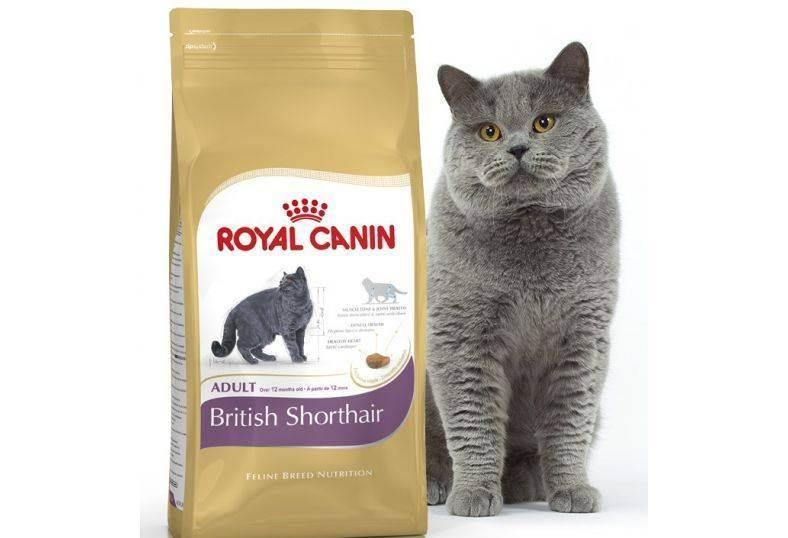 Как кормить кошек британской породы в домашних условиях: рацион и выбор корма, советы ветеринаров