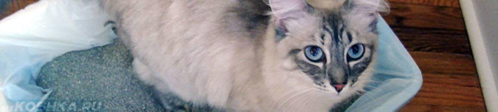 Как лечить понос с кровью у кошки?