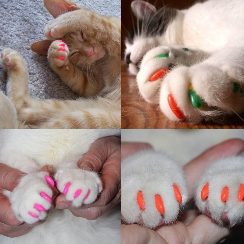 Антицарапки для кошек: отзывы ветеринаров, цена, отзывы