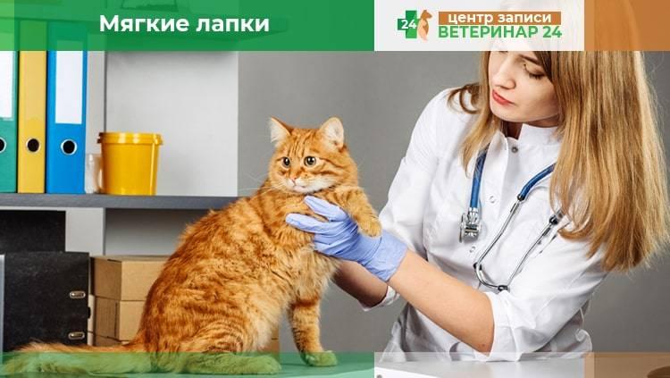 Мягкие лапки для кошек