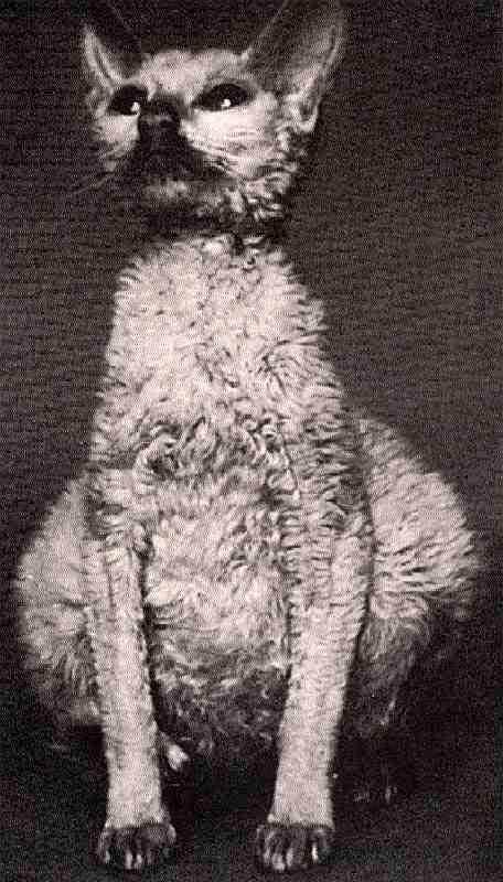 Симптоматика коронавирусного гастроэнтерита у кошки и способы лечения