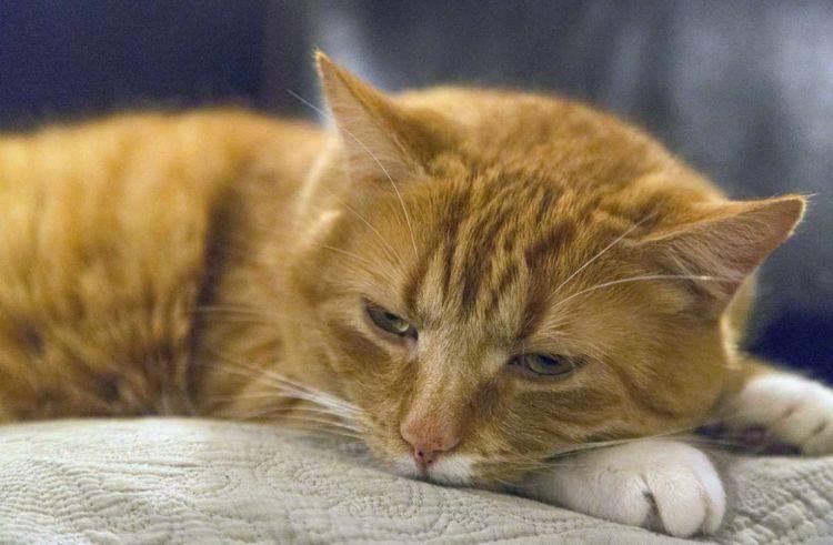 Учащенное (частое) дыхание у кошки - симптомы, лечение, препараты, причины появления | наши лучшие друзья