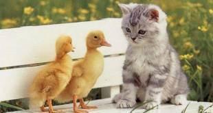 Правильные методы, как посчитать возраст кошки на человеческий