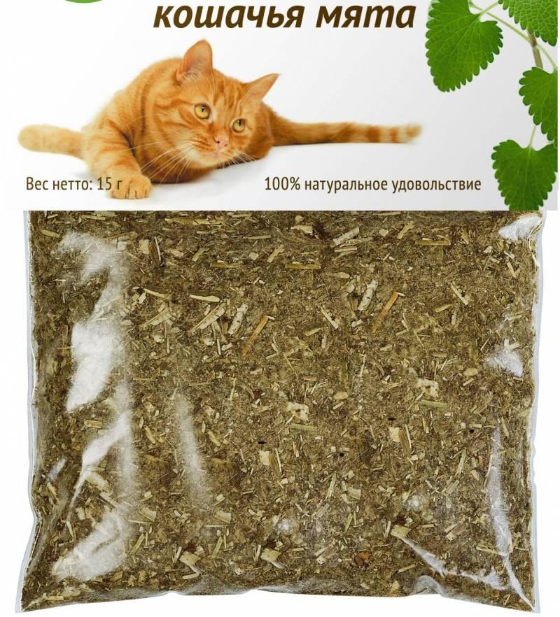 Валерьянка для кошки: как она действует на животное и что будет, если дать ее коту или кошке