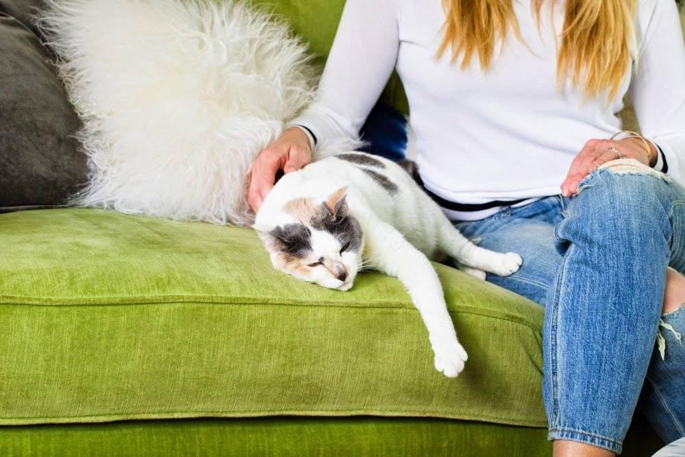 Почему кошка трется о ноги: рассказываем интересно и подробно