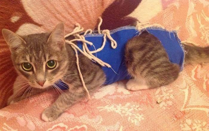 Последствия и влияние стерилизации на кошек