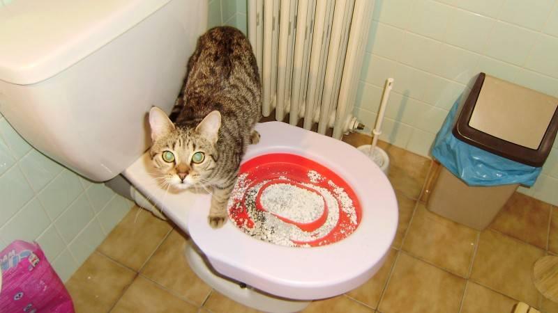 Кошка после родов не ходит в туалет: причины, симптомы, лечение