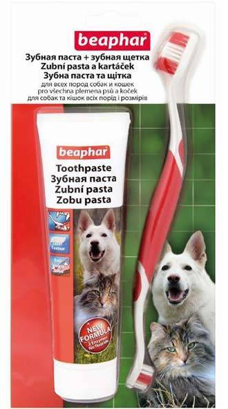 Как в домашних условиях почистить коту зубы: зубная паста и щетка, специальный корм и косточки