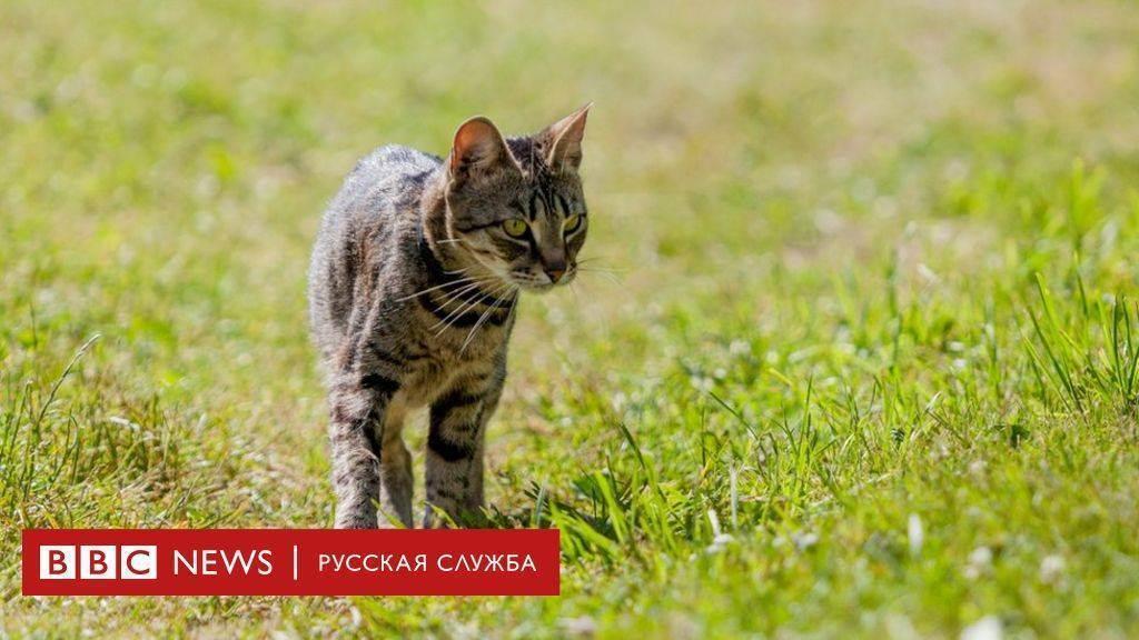 Чтобы обеззаразить сырое мясо для кошки. можно ли кошке или коту сырые продукты? внимание! обязательные меры предосторожности