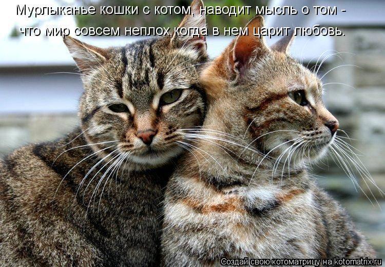 Как понять, что кошка тебя любит