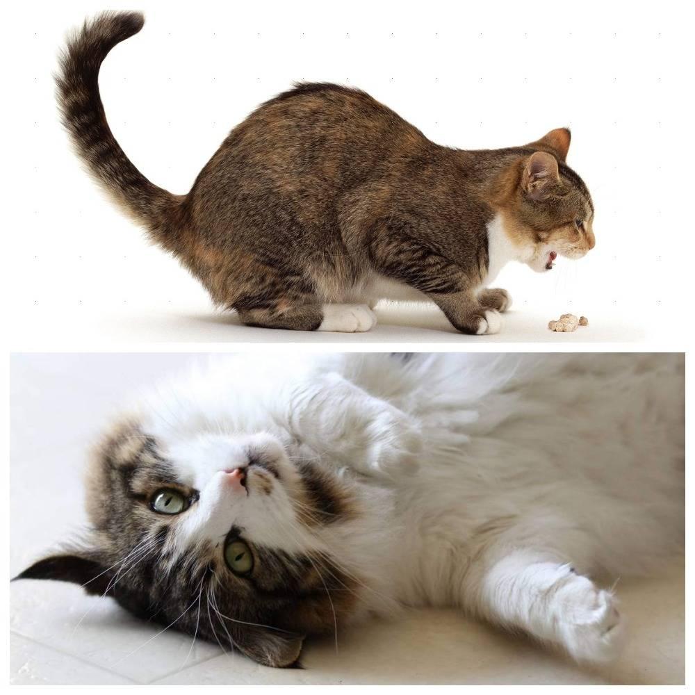 Что делать если отравился котёнок: симптомы, первая помощь, чем лечить