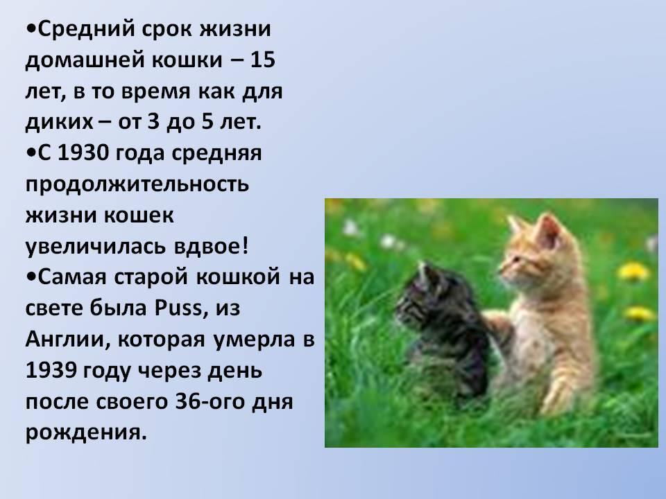 Сколько лет живут кошки и коты: средняя продолжительность жизни животных в домашних и природных условиях, что на нее влияет