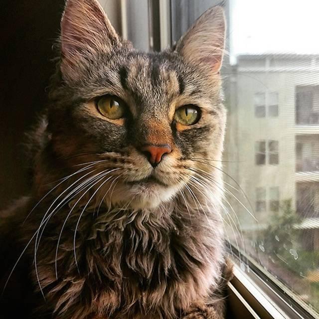 Что делать, если кот не ест и не пьет, только спит (советы ветеринара)