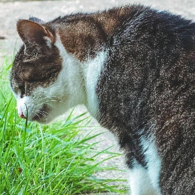Кошку рвет и ничего не ест, не пьет несколько дней: причины тошноты, первая помощь дома