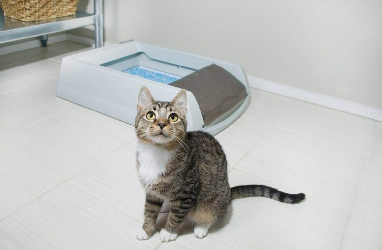 Почему кошки бегают после туалета?