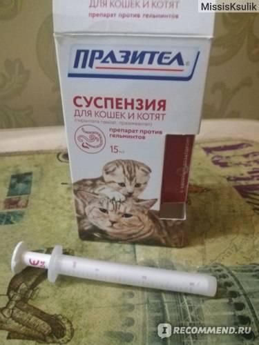Выведение глистов в домашних условиях у кошки