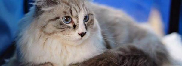 Насморк у кота (ринит): как лечить в домашних условиях?