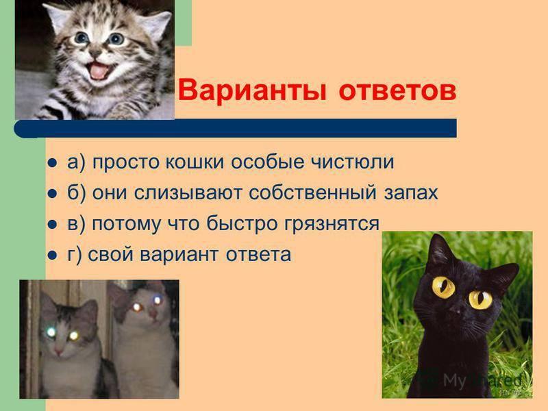 Почему кошка умывается слишком усердно