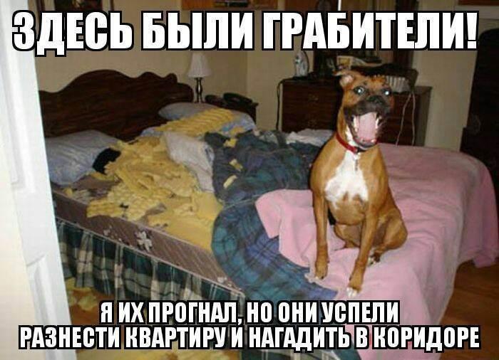 Кошка для ребенка и стоит ли заводить. - запись пользователя konopyshka (konopyshka) в сообществе домашние животные в категории хотим завести зверушку - babyblog.ru