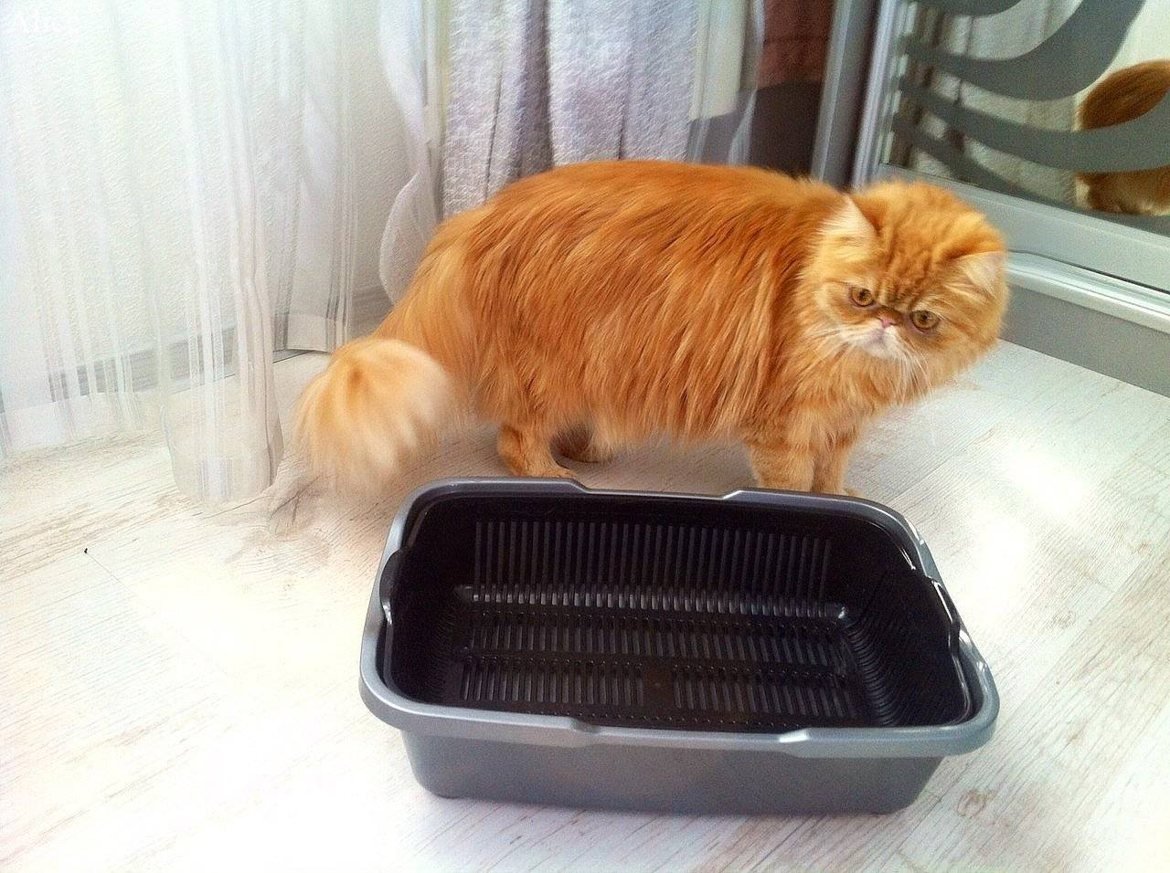 Кот перестал ходить в лоток - чем это вызвано и что делать | caticat.ru